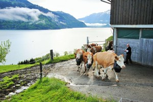 La transhumance en Suisse