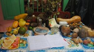 Fruits du jardin botanique