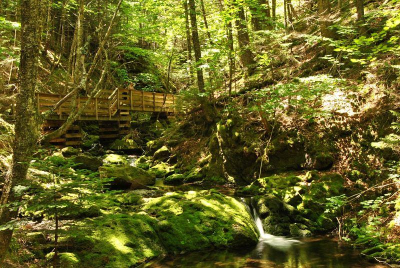Rivière dans la forêt du parc national de Fundy