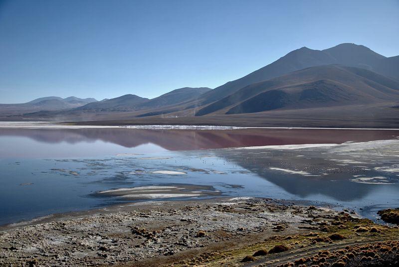 laguna colorada au sud du salar d'Uyuni