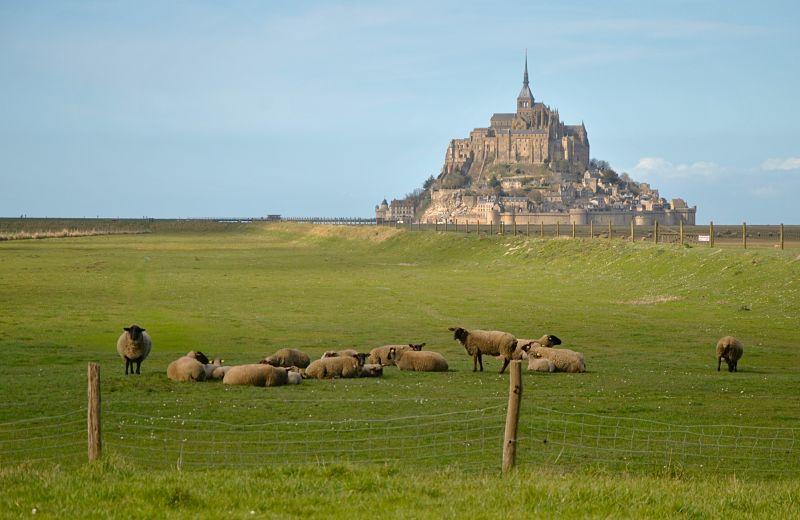 Moutons devant le Mont Saint-Michel lors de mon voyage à vélo
