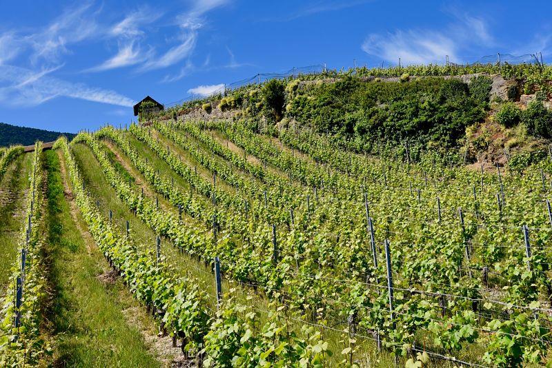 Vin de Bonvillars pendant les caves ouvertes vaudoises
