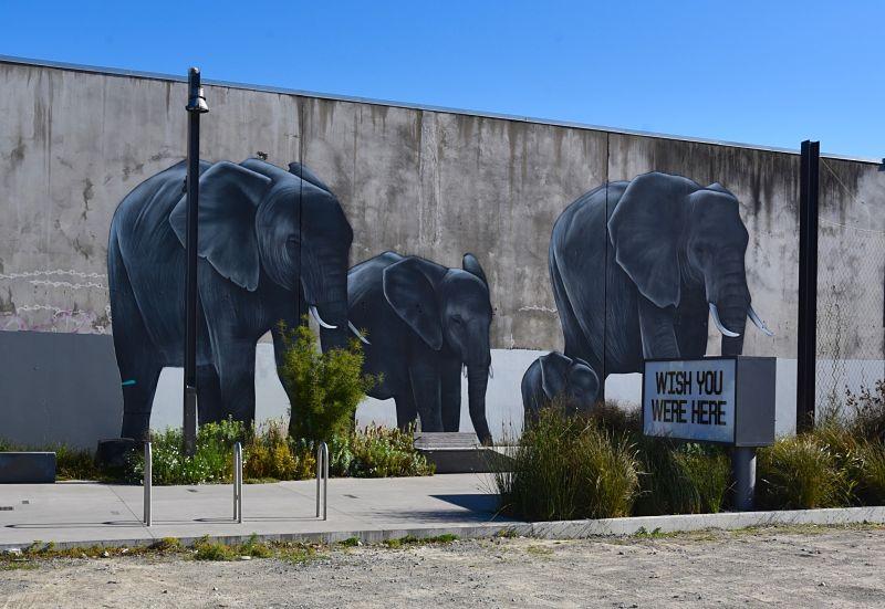street art à christchurch éléphants
