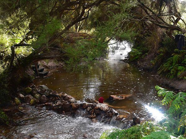 Source chaude gratuite Hot and Cold - road-trip Rotorua Nouvelle-Zélande