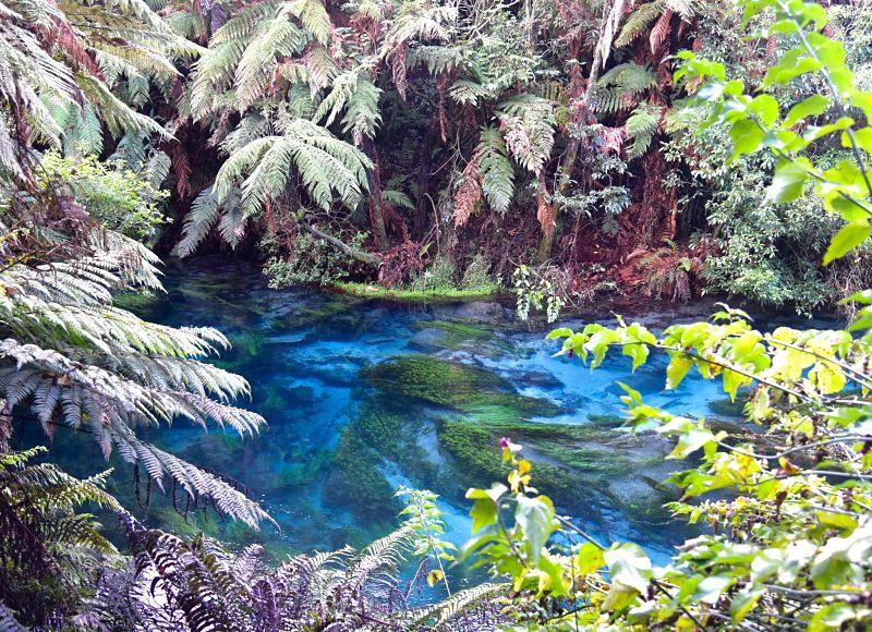 Blue Spring vers Matamata Nouvelle-Zélande